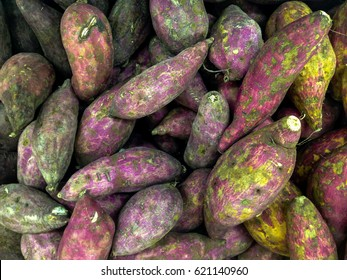 Fresh Purple Japanese yam After Harvest