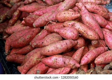 Fresh purple yams pile. Sweet potato for sale in local market. cofred yam background, pile of red or purple yam on background . fresh yam harvest agriculture in the market, sweet potato