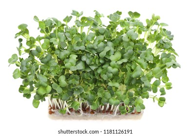 Fresh radish sprout isolated on white background, for healthy eating
