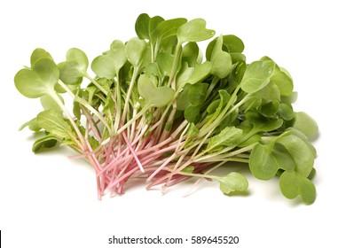 Fresh radish sprouts or Kaiware Daikon on white background