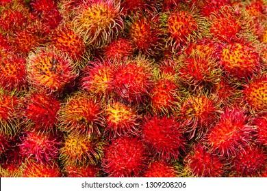Fresh rambutan fruit bunch on local market in Sri Lanka. The rambutan is a medium-sized tropical tree in the family Sapindaceae.