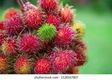 Fresh rambutan from the garden,delicious Thai fruit.