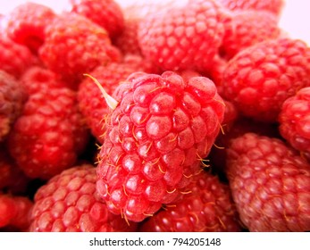 A lot of fresh raspberries