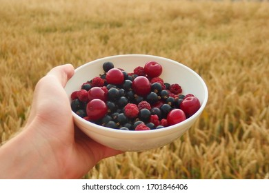 Fresh raspberries, black currant and cherries in a bowl. Wheat field in the background.