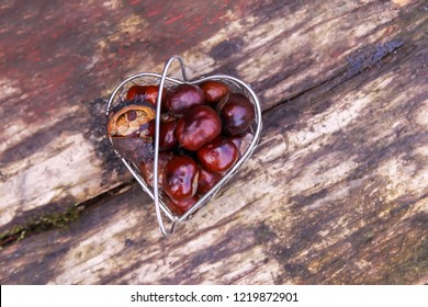 Fresh raw autumn chestnuts in a small metal basket on wooden background. Aesculus hippocastanum.
