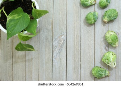 Fresh raw brussels sprouts cabbage on pale slatted wood surface or desk from a top down ariel view perspective and a potted house plant vine in the corner.
