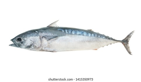 Fresh raw bullet tuna fish or bullet mackerel isolated on white background, Auxis rochei