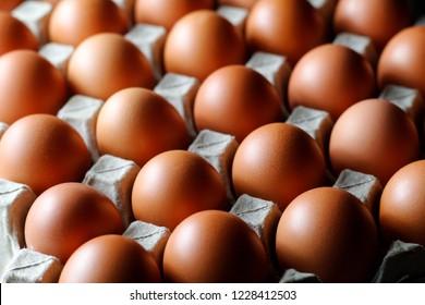 Fresh raw chicken eggs in carton egg box