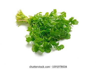 Fresh raw cilantro bunch isolated white background. Organic cilantro closeup Healthy, vegetarian food.  Flat lay Parsley indispensable source of vitamins A, C, K, B1, B2, PP, E, C