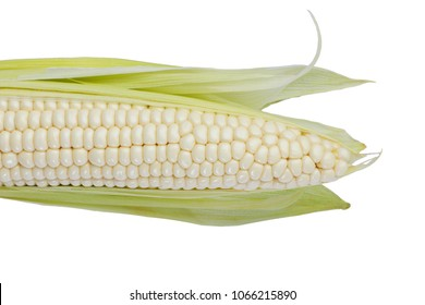 fresh raw Corn stalks isolated on white background. Freshly harvested maize cuttings from agricultural farms.The meat is still soft and boiled for human consumption. Raw corn has not been cooked.