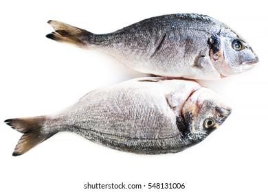 Fresh raw dorado fish isolated on white background