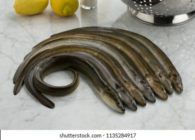 Fresh raw eels in the kitchen ready to cook