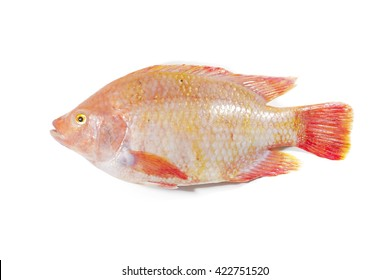 Fresh raw fish,Red tilapia,Nile tiapia (Oreochromis niloticus-mossambicus)