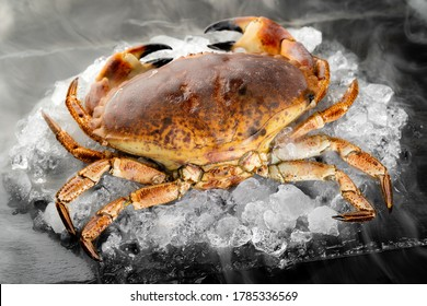 Fresh raw Florida stone crab on heap of ice on black stone plate with icy frost cold steam fog. Fresh food seafood at market concept.