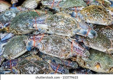 Fresh raw flower crab or blue crab in sedfood market