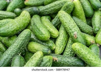 Fresh, raw, green cucumbers