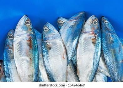 Fresh raw mackerel fish
