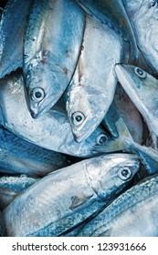 Fresh raw mackerel fish in market.