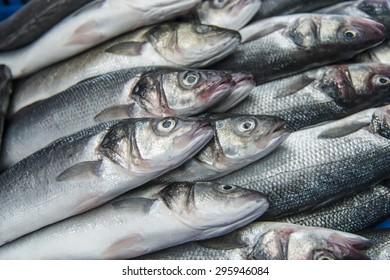 Fresh raw Mackerel fish in the market
