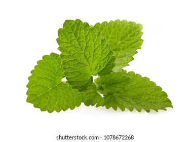 Fresh raw melissa leaves isolated on white background.Mint leaf, aromatic herbs, used as ingredients to make ice cream and herbal teas