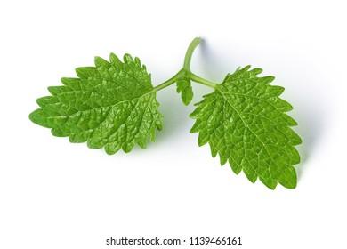Fresh raw melissa leaves, isolated on white background
