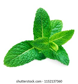 Fresh raw mint leaf isolated on white background. Spearmint leaves, peppermint macro