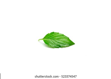 Fresh raw mint leaf isolated on white background