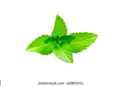 Fresh raw mint leaf isolated on white background