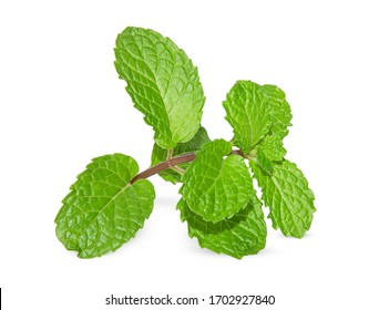 Fresh raw mint leaves isolated on white background Clipping Path.