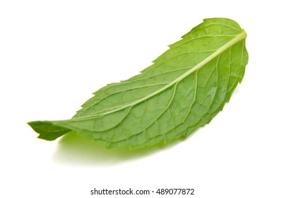 Fresh raw mint leaves isolated. Mint leaves on white background.