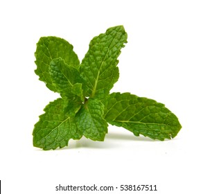 Fresh raw mint leaves isolated. Mint leaves on white background. Green mint leaves