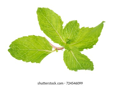 Fresh raw mint leaves isolated on white background.