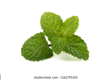fresh raw mint leaves (Melissa officinalis) isolated on white background