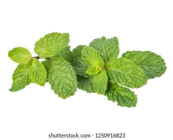 fresh raw mint leaves (Melissa officinalis) isolated on white background