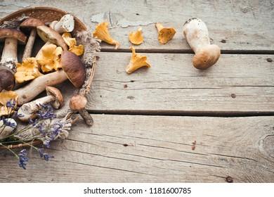 Fresh raw mushrooms close up