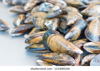 fresh raw mussels close up on gray background. Agde local market, France.