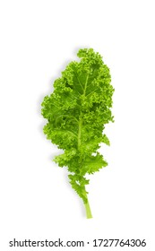 Fresh raw organic green kale leaf on white isolated background with clipping path in vertical. Kale is Superfood for diet, have omega 3 and many vitamins and mineral. Fresh vegetable and food concept.