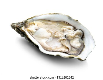 Fresh raw oyster on white background