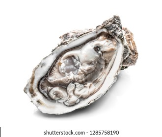 Fresh raw oysters on white background