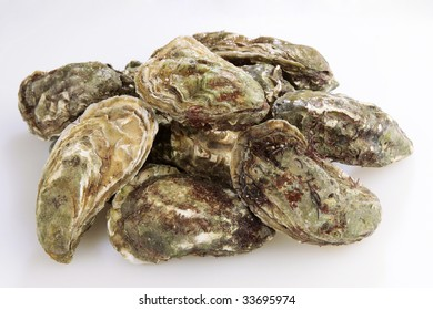 Fresh raw oysters in a pile on a white cutting board
