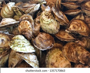 Fresh raw oysters waiting to be shucked.