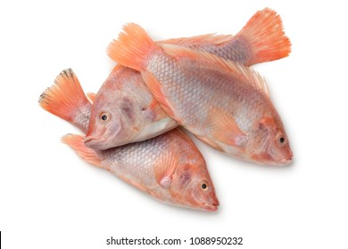 Fresh raw red tilapia fishes isolated on white background