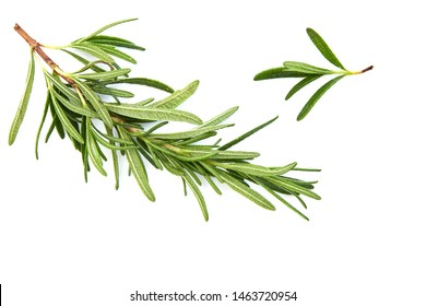 fresh raw rosemary on white background, top view