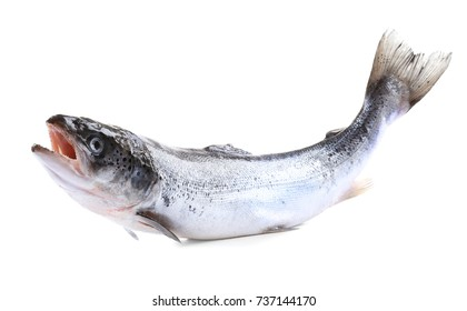Fresh raw salmon, isolated on white
