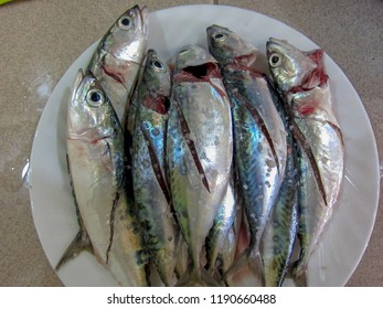 Fresh Raw Sardines Caught In Waters Around the Philippines