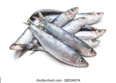 Fresh raw sardines isolated  on white background