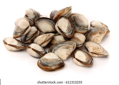 fresh raw Surf clam on white background