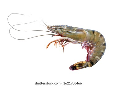 Fresh raw tiger prawns isolated on white background, Raw tiger shrimps on white with clipping path.