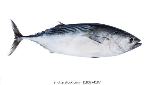 Fresh raw tuna fish isolated on white