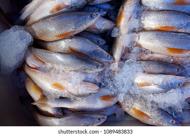 Fresh raw uncook fishes in morning market